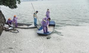 Hơn 100 người được huy động vẫn chưa vớt hết cá chết ở Hồ Tây