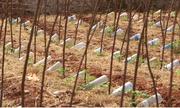 Hệ thống tưới nhỏ giọt tự chế từ chai nhựa bỏ đi