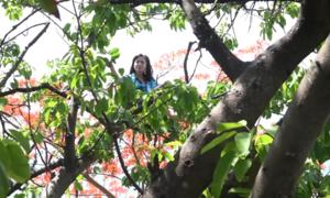 Cảnh sát 113 giải cứu cô gái 'ngáo đá' la hét trên cây