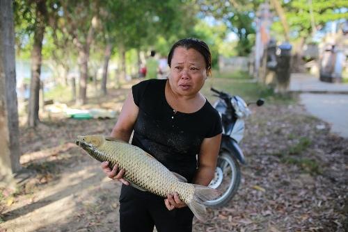 Bà Ty khóc nghẹn khi ba lồng cá trắm cỏ gần thu hoạch bị chết đồng loạt. Ảnh: Võ Thạnh