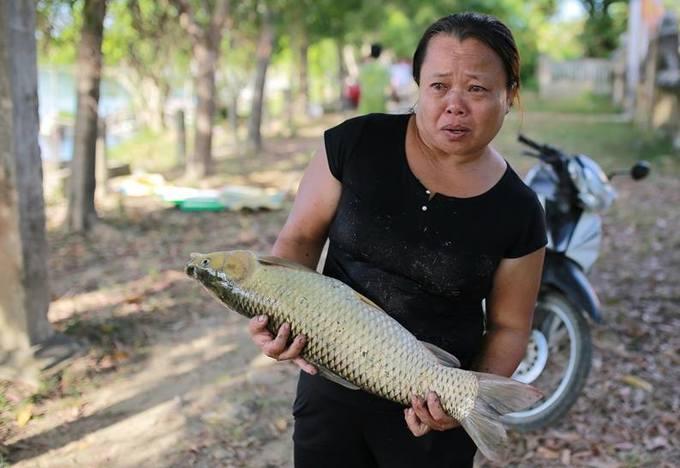 Cá nuôi lồng chết hàng loạt trên sông ở Huế