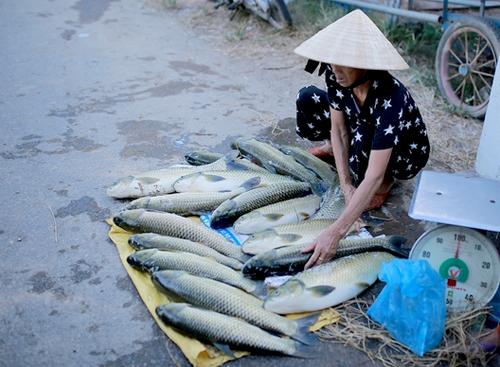 Người dân vớt cá nổi lờ đờ bán tháo cho người qua đường. Ảnh: Võ Thạnh