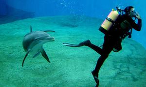 Vì sao thợ lặn phải mặc bộ đồ chịu áp suất lớn?