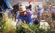 Làm vườn giúp tù nhân Mỹ điều hòa cảm xúc