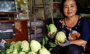 Người phụ nữ thu hai tỷ đồng mỗi năm từ 5.000 gốc mãng cầu na hạt lép