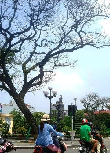 Các cây Muồng ngủ bên tượng đài Nữ tướng Lê Chân, Hải Phòng bất ngờ rụng trụi lá, lăn ra chết. Ảnh: Giang Chinh