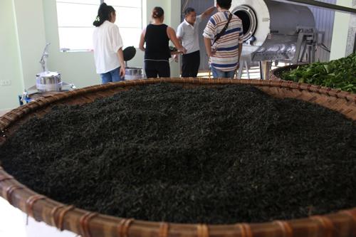 Trà được chế biến kỳ công, đặc biệt ở chỗ để chè tự lên hương, không dùng bất kỳ chất gì tạo màu, tạo mùi hay chất bảo quản. Ảnh: Xuân Chinh