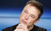 Elon Musk công kích thợ lặn Anh cứu đội Lợn Hoang