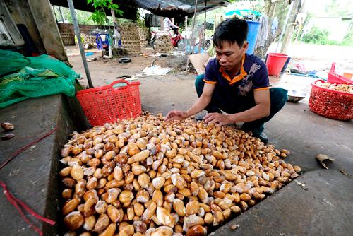 Một cơ sở thu mua hạt sầu riêng tại huyện Di Linh. Ảnh:Hoàng Trường.