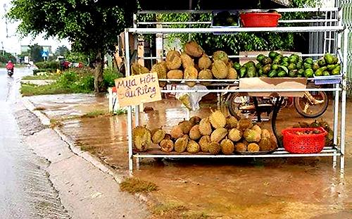 Một điểm thu mua hạt sầu riêng ở Lâm Đồng. Ảnh: Khánh Hương.