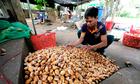 Lâm Đồng 'sốt' hạt sầu riêng