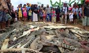 Dân làng Indonesia giết gần 300 con cá sấu trả thù cho người bị tấn công