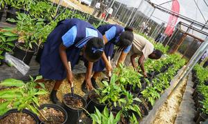 Ngôi trường Ấn Độ đưa môn Nông nghiệp vào giảng dạy