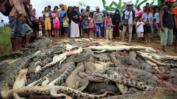 Local residents look at the carcasses of hundreds of crocodiles from a farm after they were killed by angry locals following the death of a man in a crocodile attack.   Read more at https://www.channelnewsasia.com/news/asia/crocodiles-killed-angry-mob-indonesia-revenge-attack-10534408