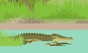 Cách cá sấu mẹ dùng nhiệt độ quyết định giới tính con non
