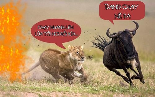 Làm sao để linh dương qua sông mà không bị sư tử ăn thịt?