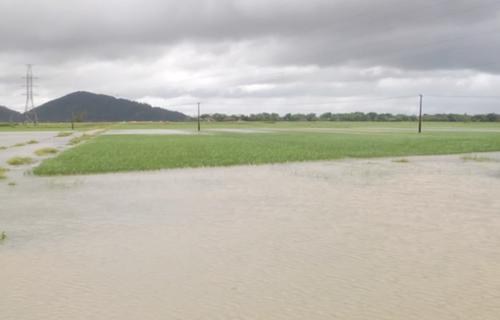 Nhiều diện tích lúa mơid gieo cấy ở Nghệ An bị ngập úng.