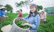 Cô gái Thái Nguyên làm mát-cha từ búp trà Tân Cương