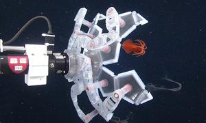Robot bắt sinh vật biển sâu bằng lồng chứa mềm