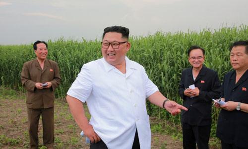 Lãnh đạo Triều Tiên Kim Jong-un thăm cánh đồng ở huyện Sindo, tỉnh Phyongan hồi tháng 6. Ảnh: Reuters.