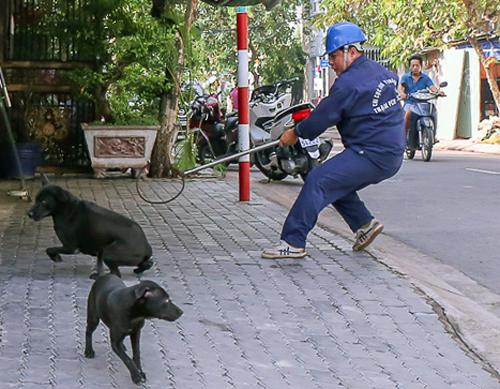 Đội bắt chó thả rông trong một lần xuống địa bàn. Ảnh: Tuyết Nguyễn