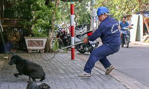 Ông Đoàn Ngọc Hải muốn dẹp nạn chó thả rông ở trung tâm Sài Gòn