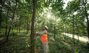 Việt Nam thuộc khu vực điểm nóng chặt phá rừng