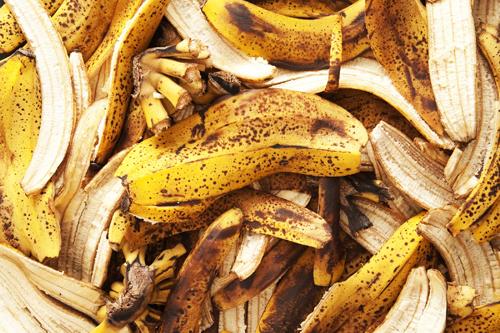 Vỏ chuối là nguồn phân bón sẵn có và rẻ tiền. Ảnh: meemu