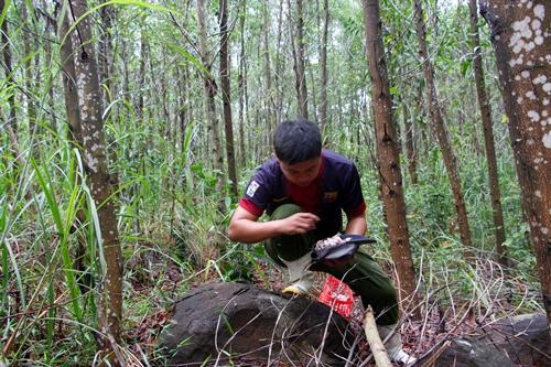 Anh Minh luồng lách trong cây cỏ tranh tìm kiếm nấm tràm.