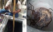 Đội cứu hộ Ấn Độ đưa mẹ con rắn hổ lên khỏi giếng sâu