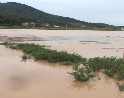 Sông Lục Nam đang dâng cao, tỉnh đã ra báo động cấp 1. Ảnh: Báo Bắc Giang.
