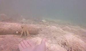 Bạch tuộc nhờ thợ lặn đẩy giúp khúc gỗ để bắt mồi