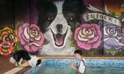 Chủ sắm biệt thự nửa triệu đô cho chó cưng ở Bắc Kinh