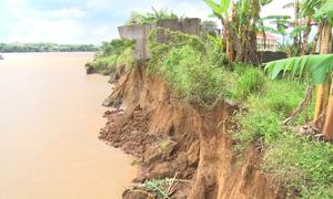 Nhiều điểm bờ sông Đồng Nai bị sạt lở sâu