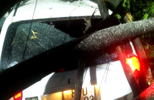 Kính ôtô bị cây đè vỡ. Ảnh: Nguyên Huy.