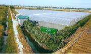 Hàng rào cỏ voi giúp bảo vệ trang trại hữu cơ