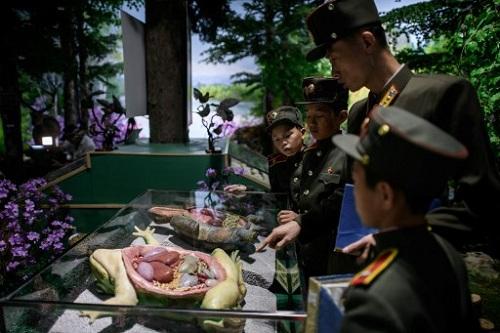 Học sinh quan sát mô hình nội tạng cóc trong một tiết sinh học ở trường Mangyongdae hôm 14/7. Ảnh: AFP.