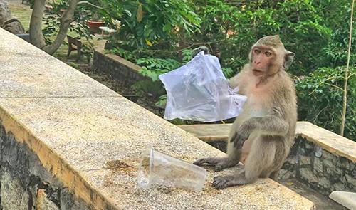 Ông bà Tây bán ống hút bảo vệ môi trường ở Sài Gòn