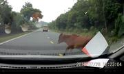 Thế nào là 'chó tránh đầu, trâu tránh đuôi' khi lái ôtô