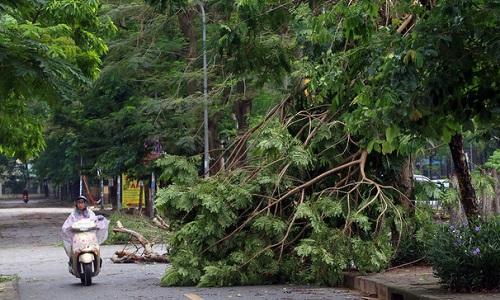 Cây đổ sau mưa giông ở Hà Nội. Ảnh: Phương Sơn
