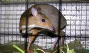Nhiều thú rừng được giải cứu khỏi quán nhậu ở Đồng Nai