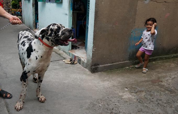 Người đàn ông nuôi giống chó cao nhất thế giới ở Sài Gòn