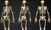 Tại sao xương người bị giảm số lượng khi trưởng thành?