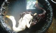 Lò giết mổ dùng chất cấm để vặt lông, tẩy trắng thịt vịt