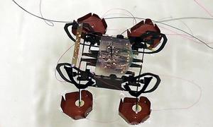 Robot gián có thể đi bộ trên mặt nước