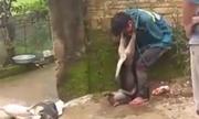 Đạo chích bị dân làng vây đánh, treo chó vào cổ