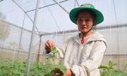 Nữ giảng viên bỏ dạy về quê trồng dưa lưới