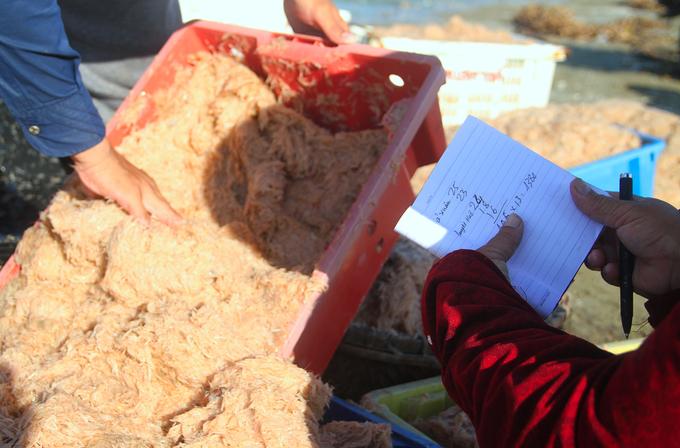 Ngư dân Hà Tĩnh trúng mùa ruốc, thu tiền triệu mỗi ngày