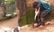 Bắt cáºu tặc Ãeo xÃÂ¡c chó lên cá» là xúc phạm nhân pháºm