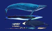So sánh kích thước những loài động vật sống trên 100 năm